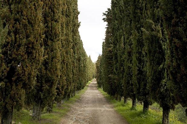 Cypress-Lined Path Volpaia, Tuscany