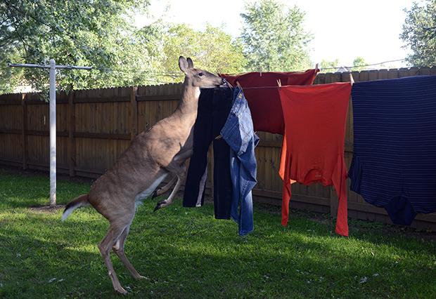 Lilly clothesline
