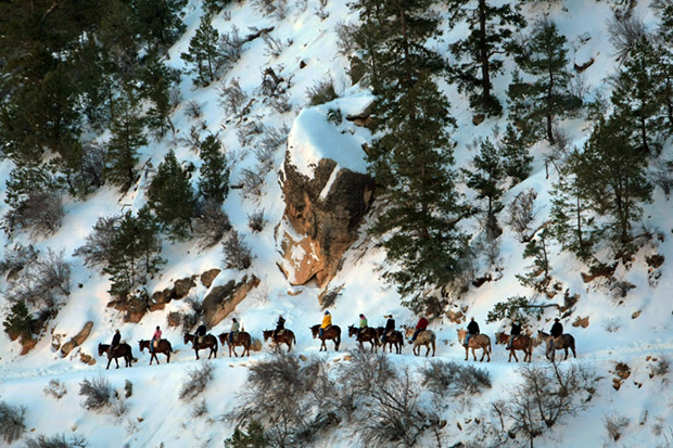 Visitors on Mules Ride the Bright Angel trail, Grand Canyon