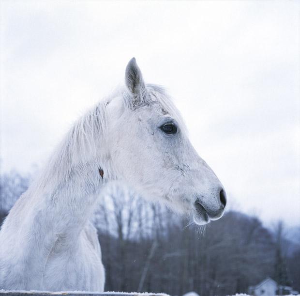 Winter Horse in the Catskills
