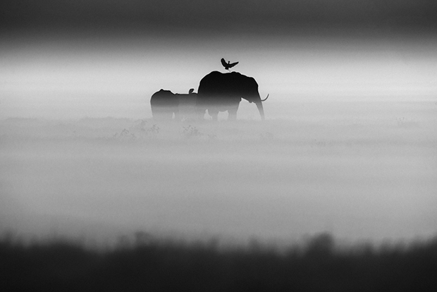 1532-Elephants and bird, Kenya 2015 ©Laurent Baheux