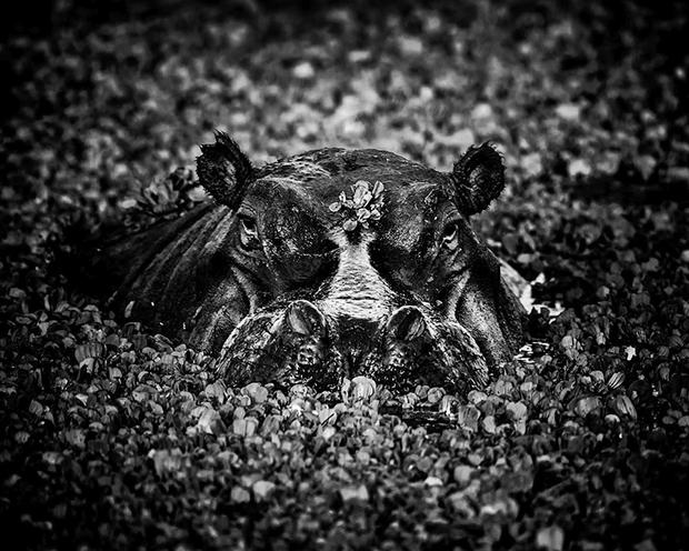 Hide-and-seek,-Kenya-2013