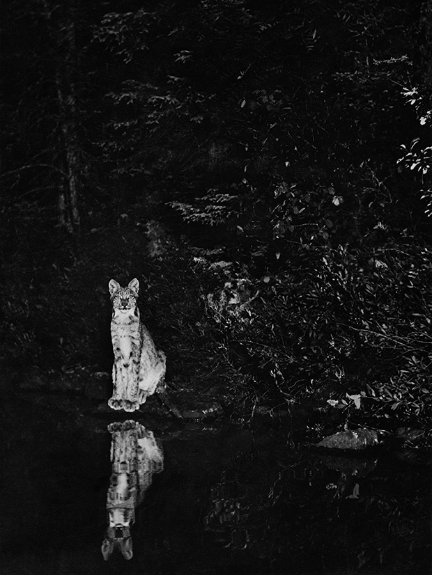 Turn-of-the-Century Photographs Capture the Midnight Rituals of Wild Animals