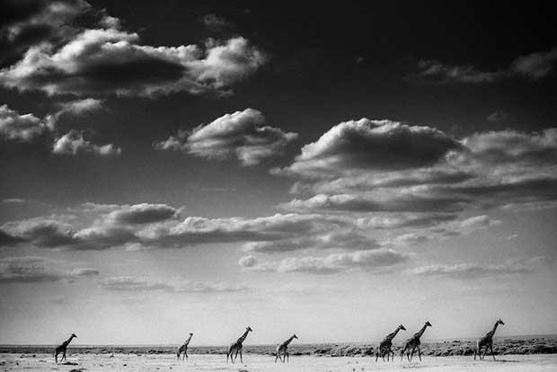 Laurent Baheux - Caravan, Kenya 2013 - 900 x 600 - 72 dpi