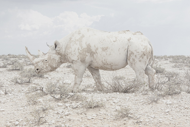 Wild Animals Camouflaged within the Vast Expansive of Namibia - Feature Shoot