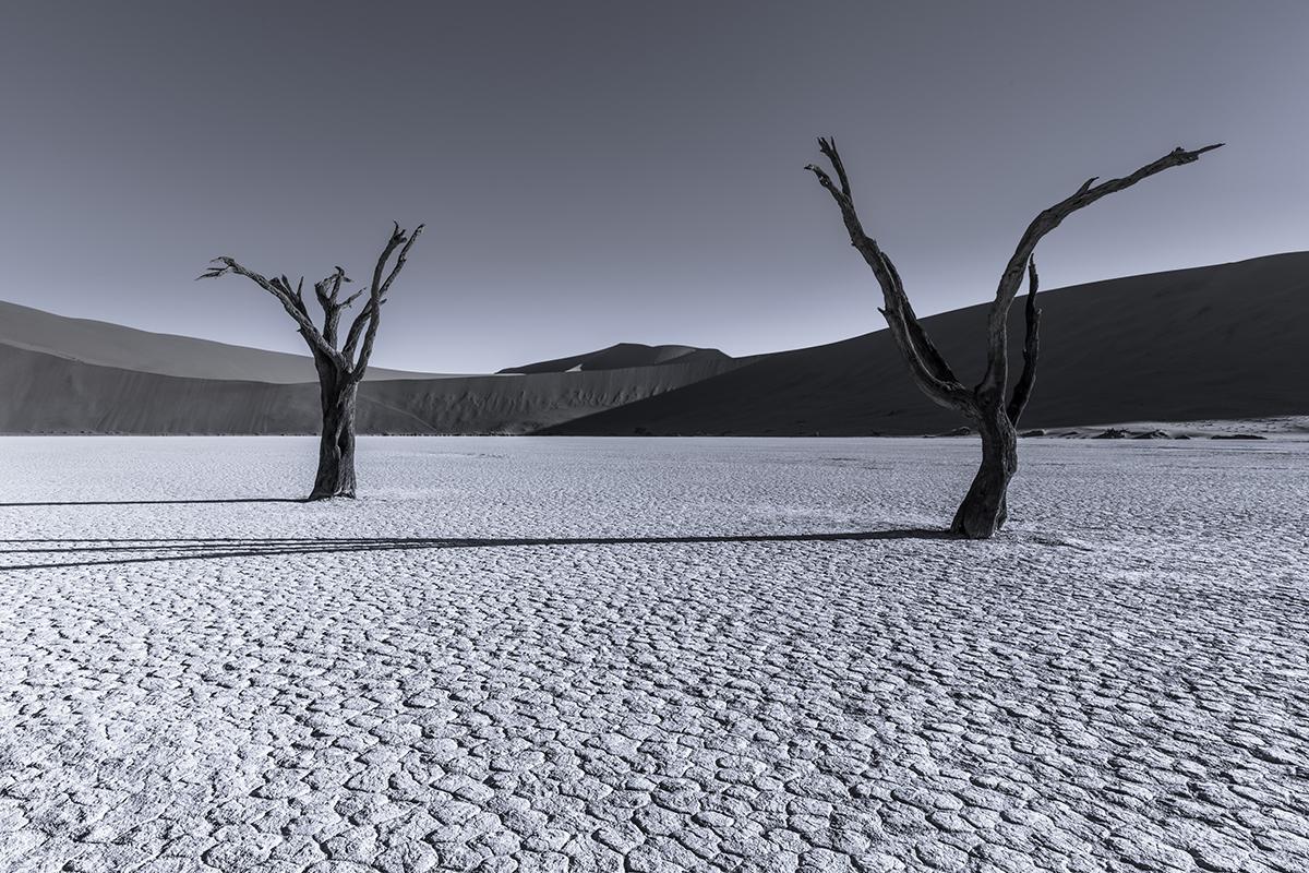 Distraction (Namibia 2015)