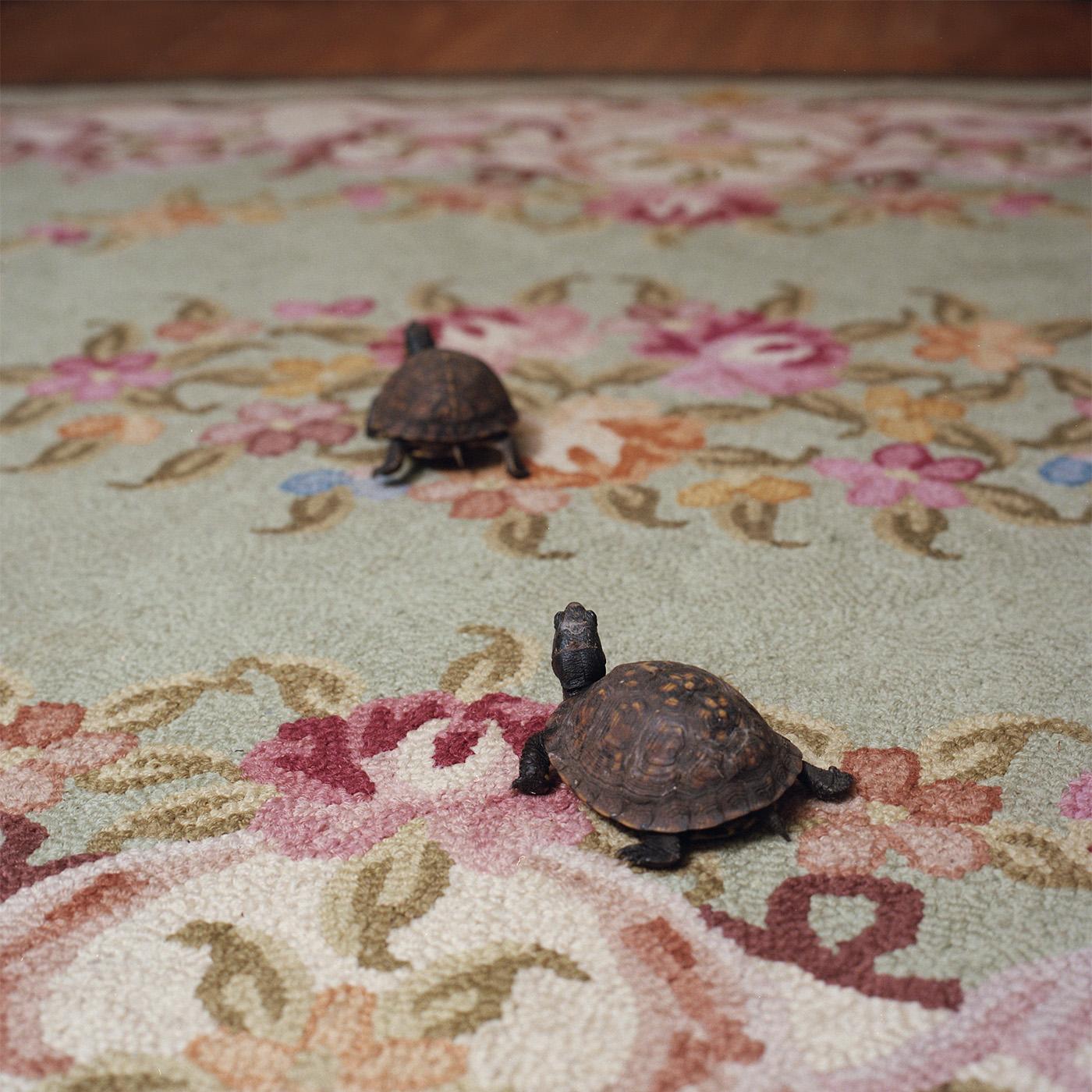Eastern Box Turtles