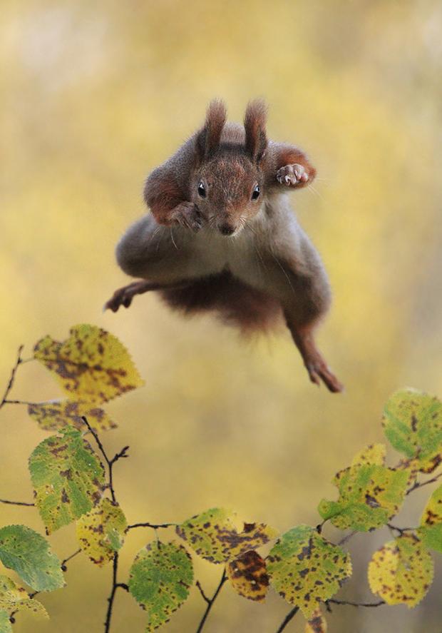 Kung Fu Squirrel