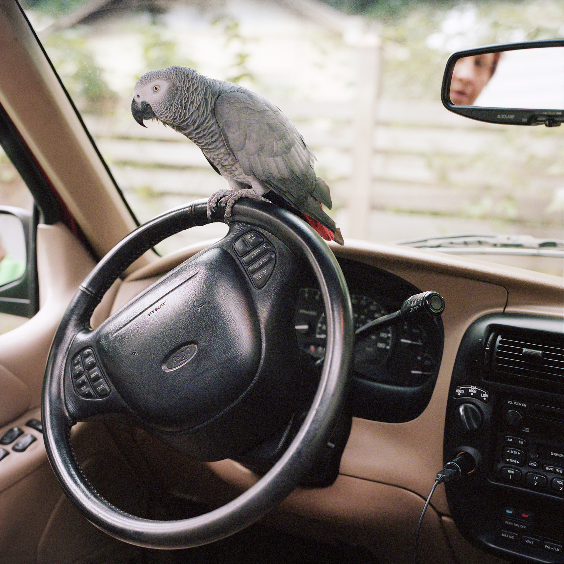 Isis (African Gray Parrot)