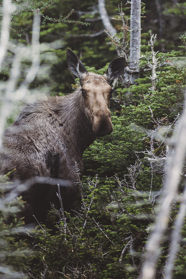 FeatureShoot-Moose-Finn_Beales-1