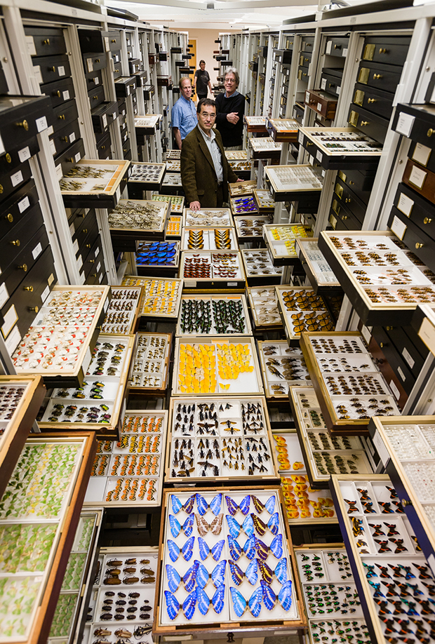 Entomology Collections, National Museum of Natural History