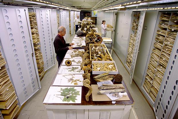 Botany Collections, Natural History Building