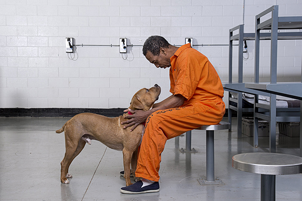 Canine Cellmates