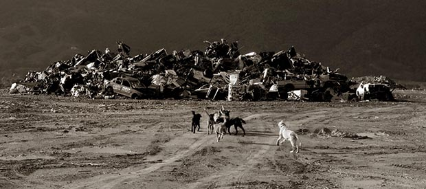 A pack of dogs runs together at a dump in Fajardo, Puerto Rico.