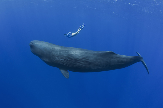 Swimming with the Creatures of the Sea (Sponsored)