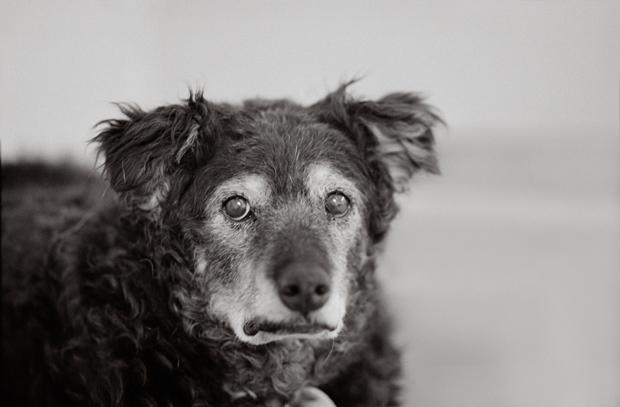 13_B Curley 14 years old Kanab, Utah Best Friends Animal Society