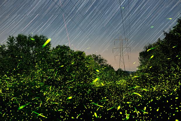 Fireflies_07-12-16_7074-7299_FingarGrid_640pxForFS