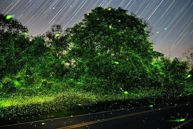 Fireflies_07-12-16_7565-7775_Fingar_HH_640pxForFS