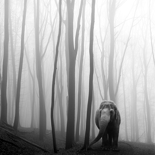 A Dark and Majestic Fairy Tale of Animals Lost in the Forest Mist