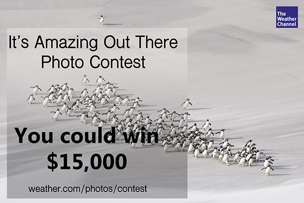 wildlife_photo_contest