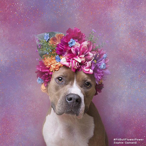 Alize - Monmouth County SPCA
