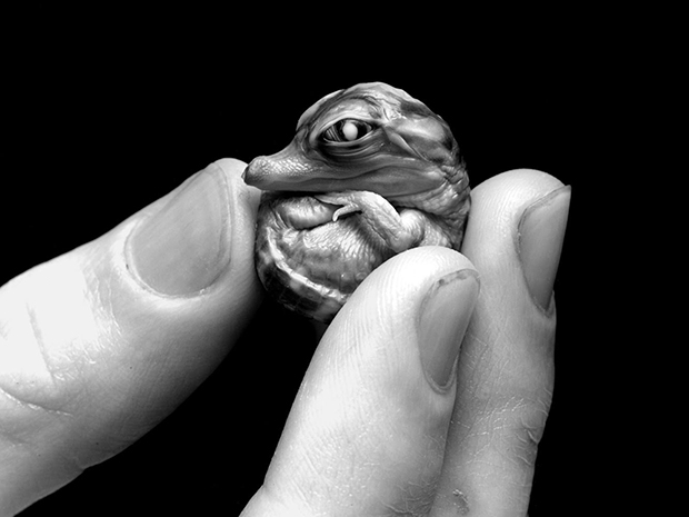 Intimate Photographs of Tiny Creatures in Human Hands