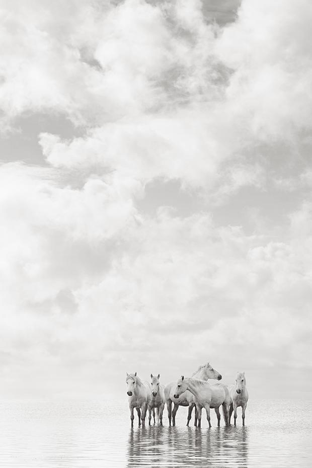 white-horses-camargue-drew-doggett-dreamland