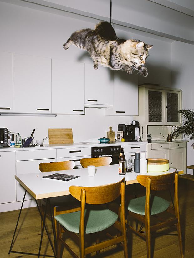 02_catcal_gebhart_de_koekkoek