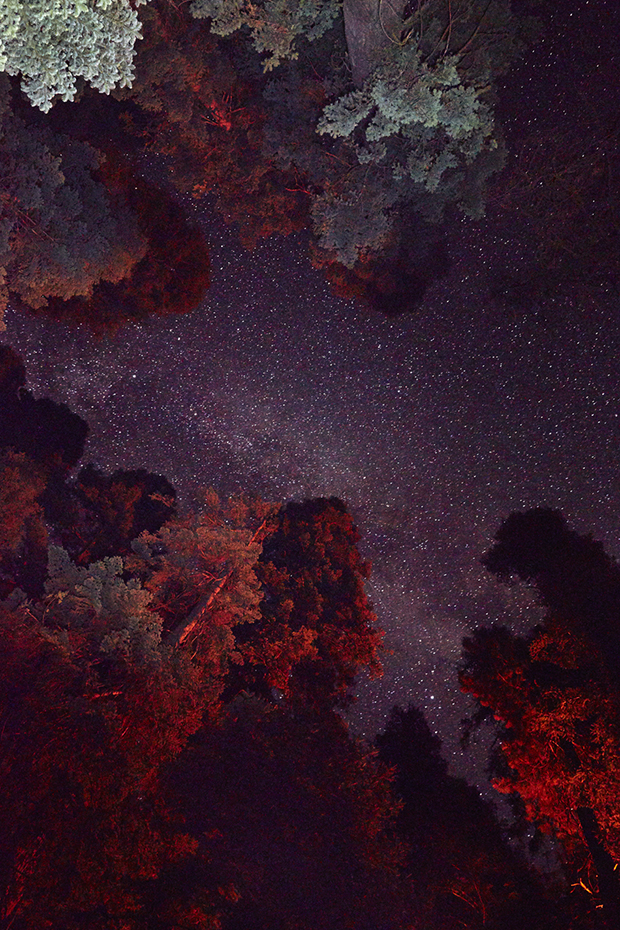sequoia_0290_site