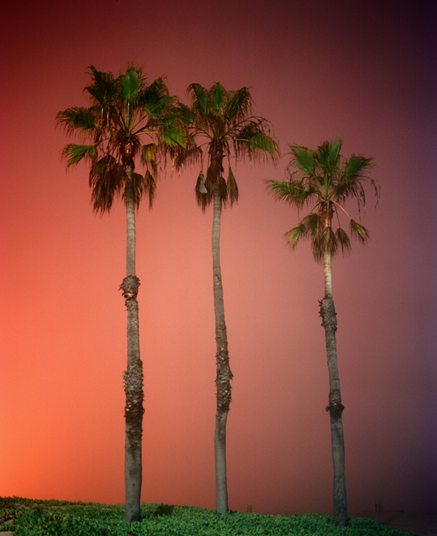 palms-dockweiler-12-12