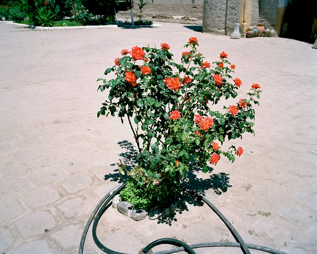marco-barbieri-water-in-the-desert-roses