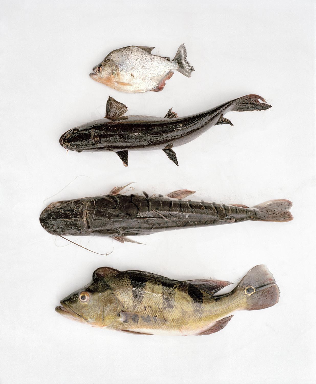 napo69-11total_poissons