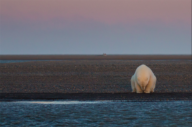 Haunting Photos of Polar Bears in a World Without Ice - Feature Shoot