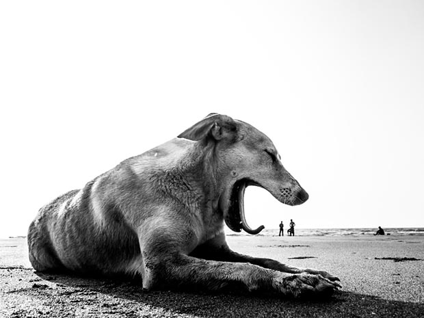 Poignant, Playful Photos of the Stray Dogs of India