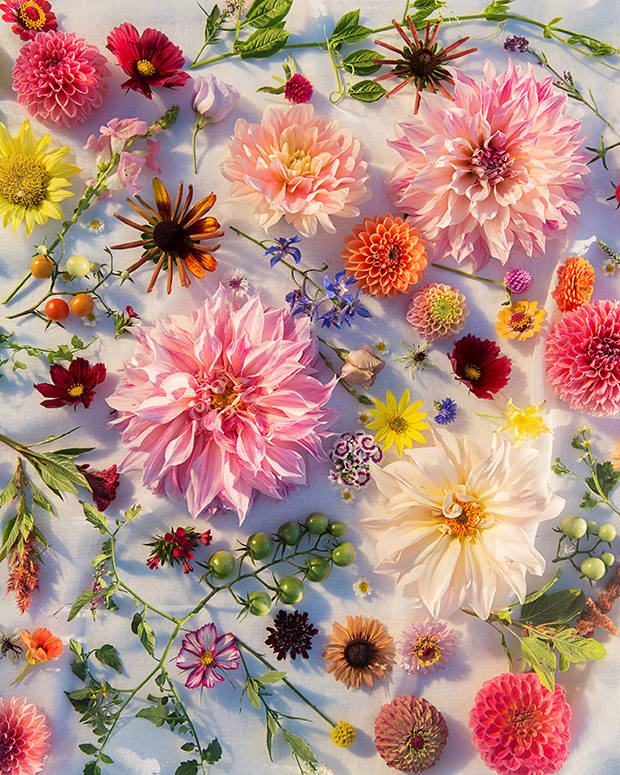 20 Beautiful, Uncommon Photos of Flowers