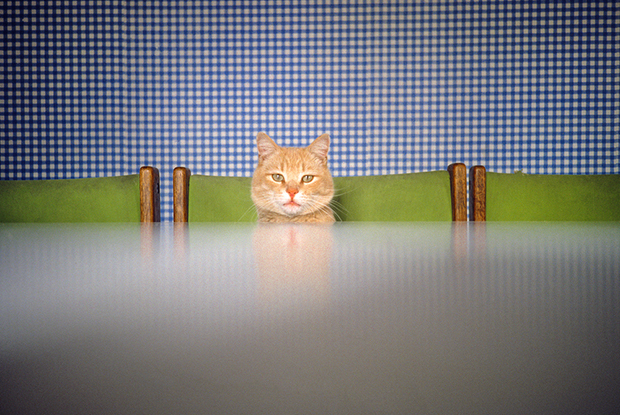 A New Photo Book for People Who Love Cats