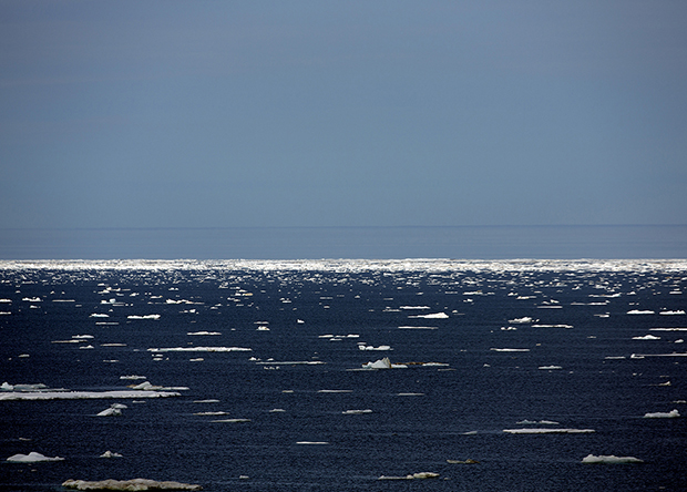 This Is What's at Stake If We Allow Drilling in the Arctic - Feature Shoot