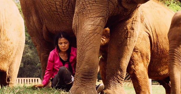 The Story of the Fearless Woman Who Saves Elephants