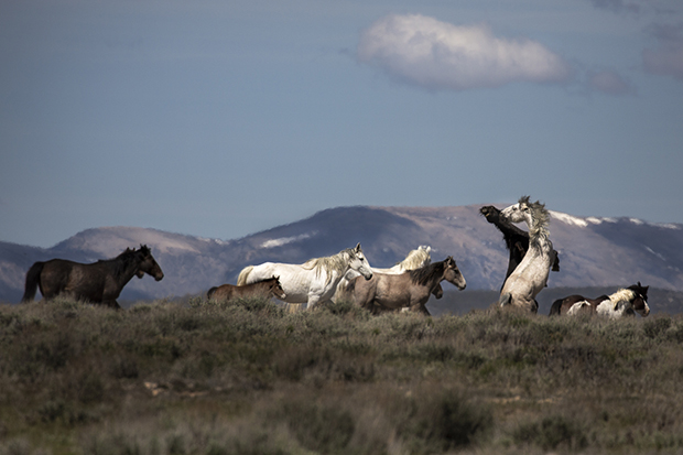 One Photographer's Commitment to the Vulnerable Wild Horses of the United States