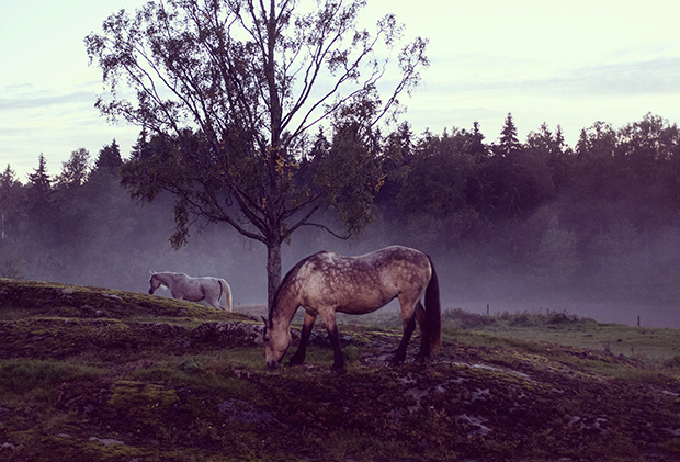 Magical, Moody Photos from Daily Life in a Norwegian Neighborhood