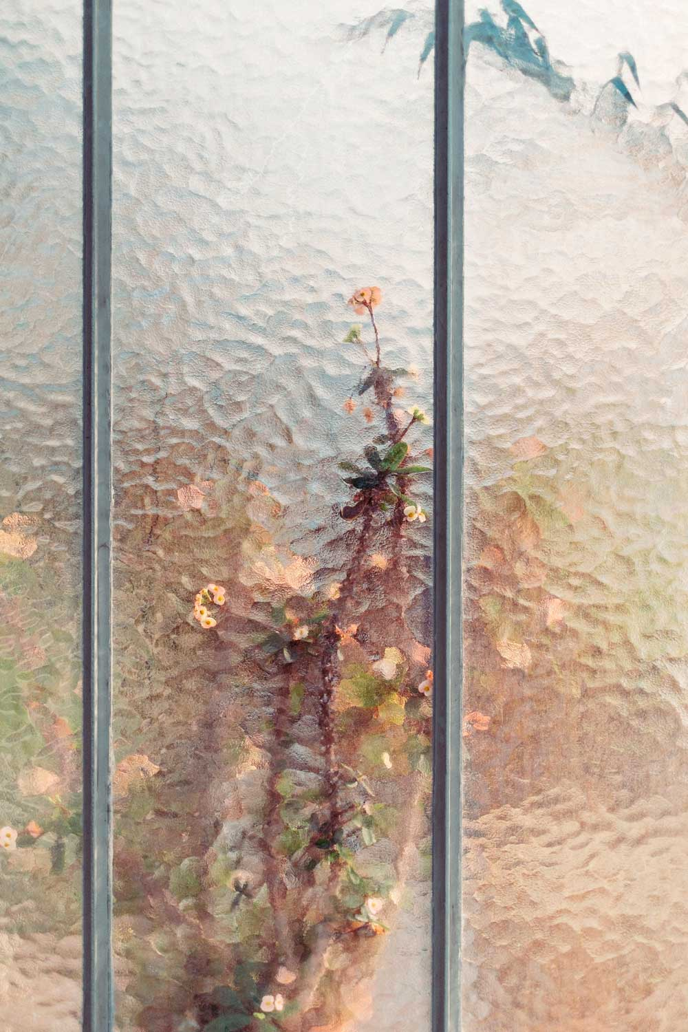 These Photos of Plants in Greenhouses Look Like Paintings