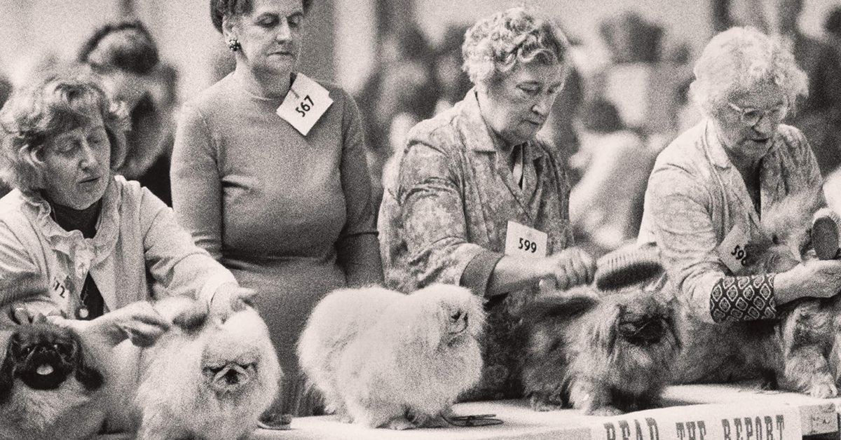 These Vintage Dog Show Photos Are Sure to Make You Smile - Feature Shoot