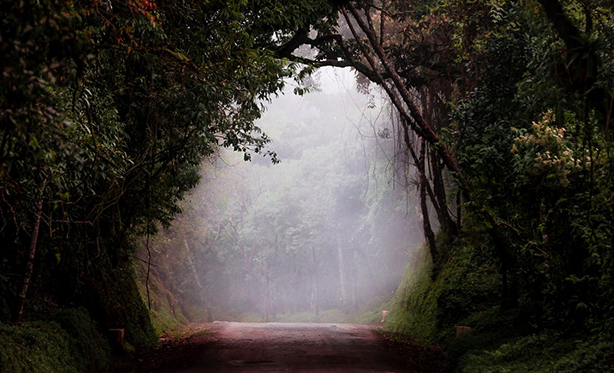 Mysterious Photos from the Forests of Brazil
