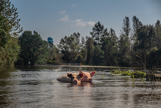 Stirring Photos of Animals in the Aftermath of Hurricane Florence