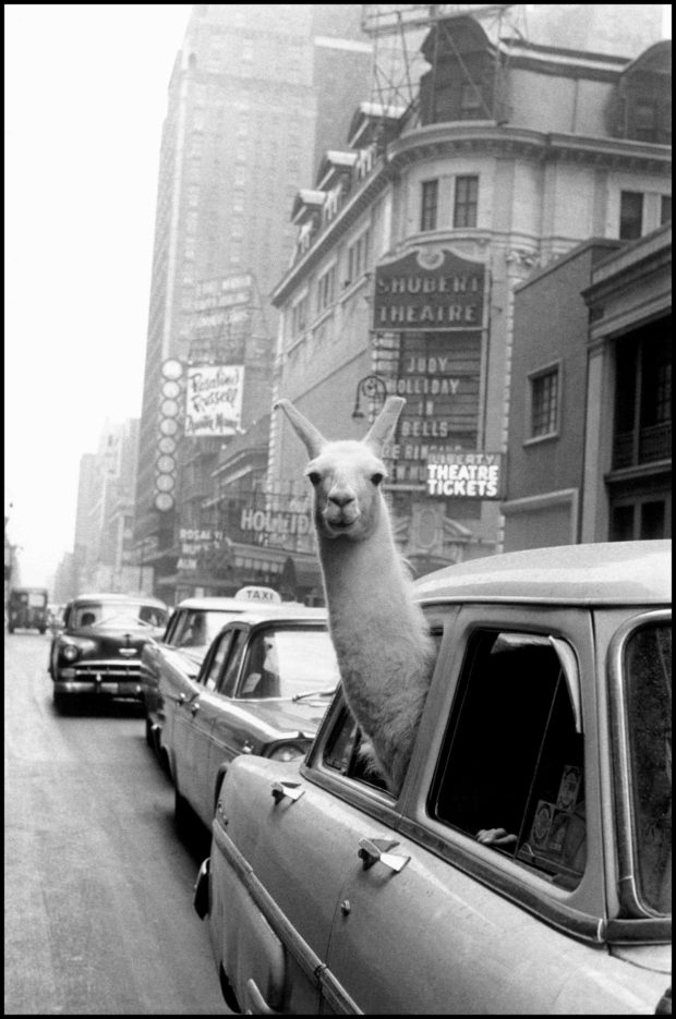 The Extraordinary Life of Inge Morath
