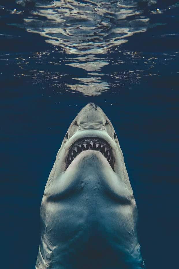 We spoke to the diver whose photo recreated the 'JAWS' movie poster