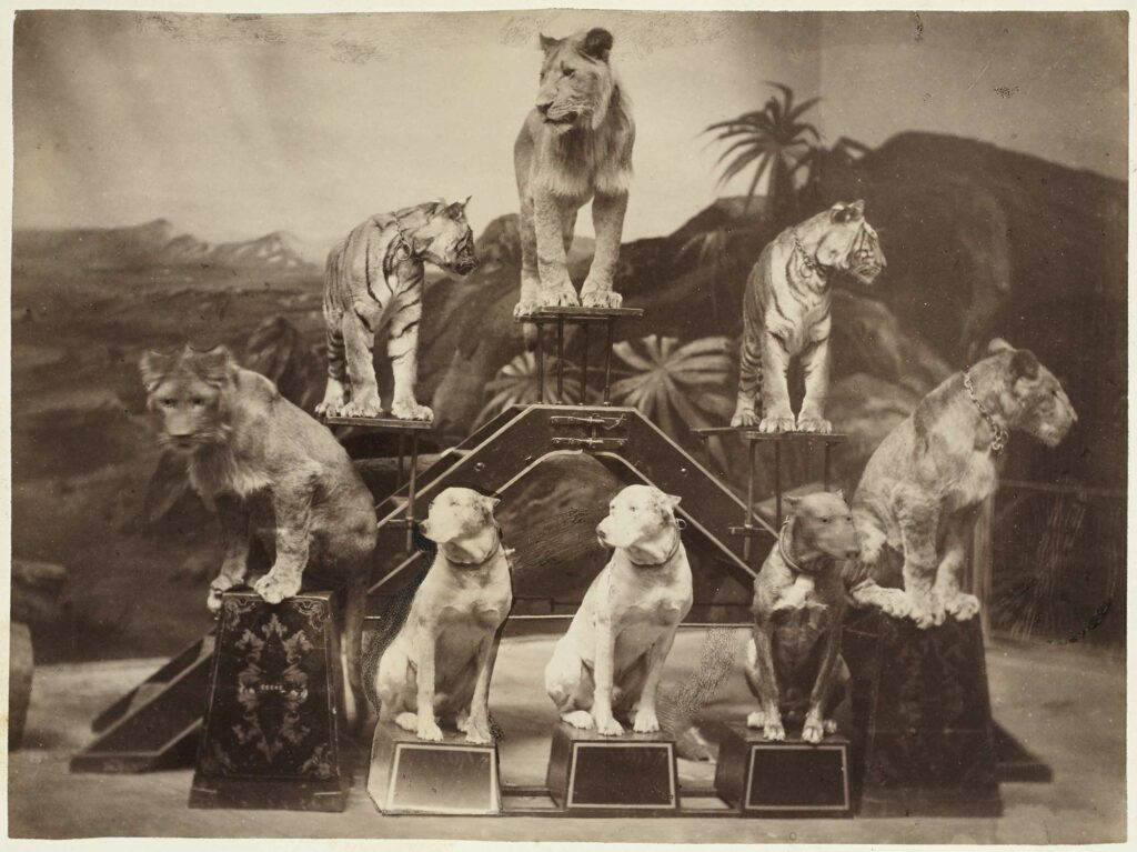 The Complicated Role of Animals in the History of Photography