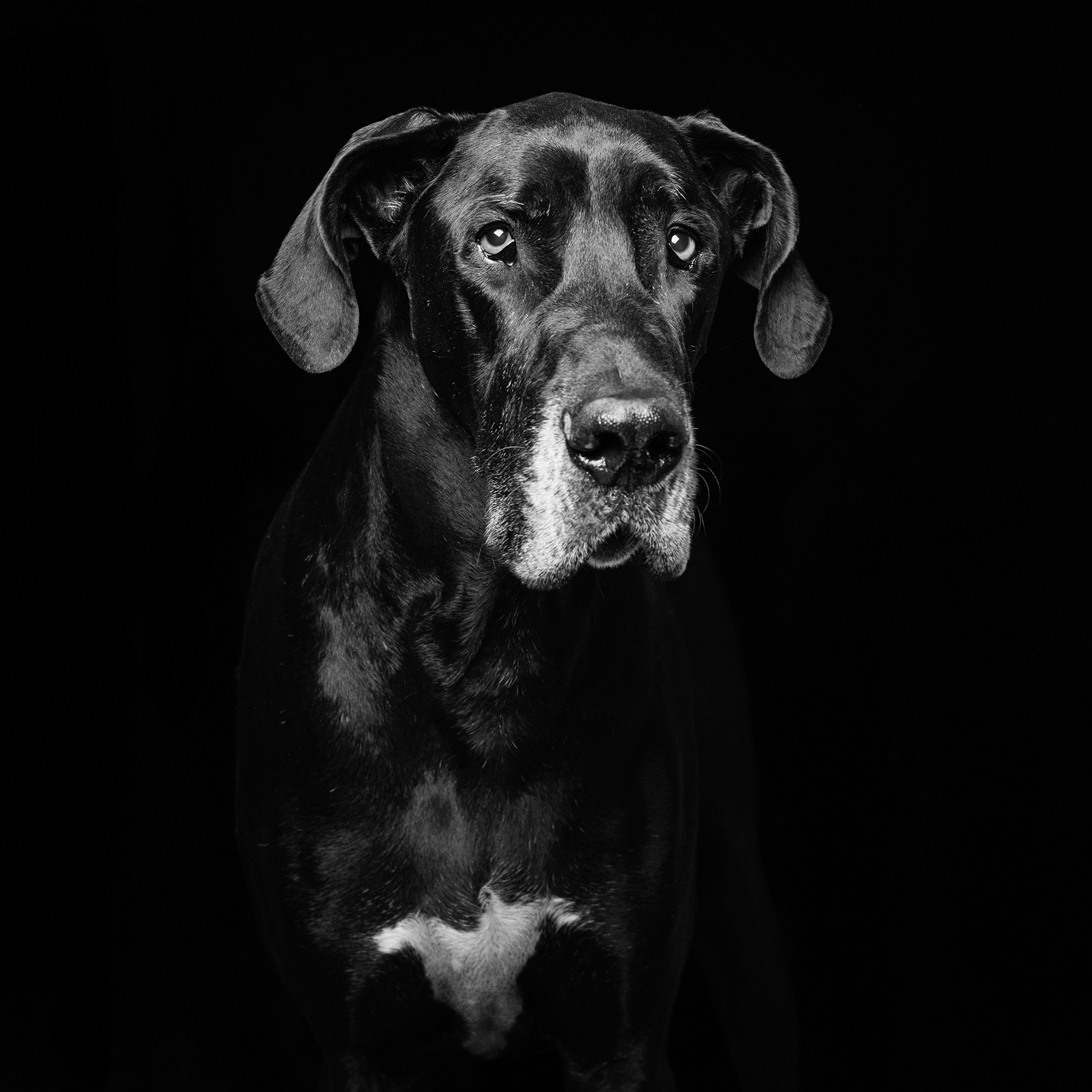 Overlooked Black Rescue Dogs Shine in Emotional Portraits