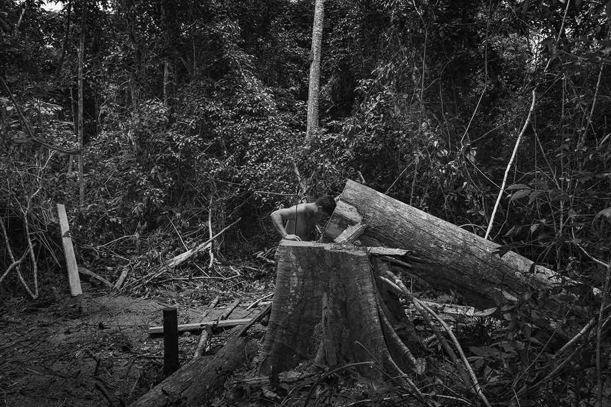 The Destruction of the Amazon in Photos - Feature Shoot
