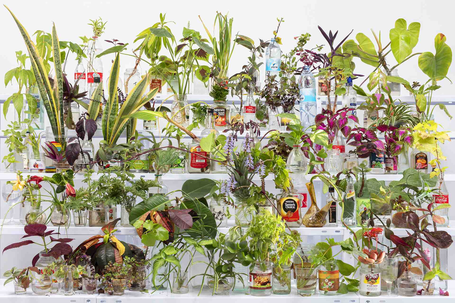 A Photographic Garden Grows in Times Square - Feature Shoot